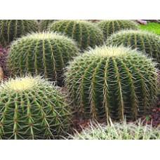 Ароматизатор Xi'an Cactus